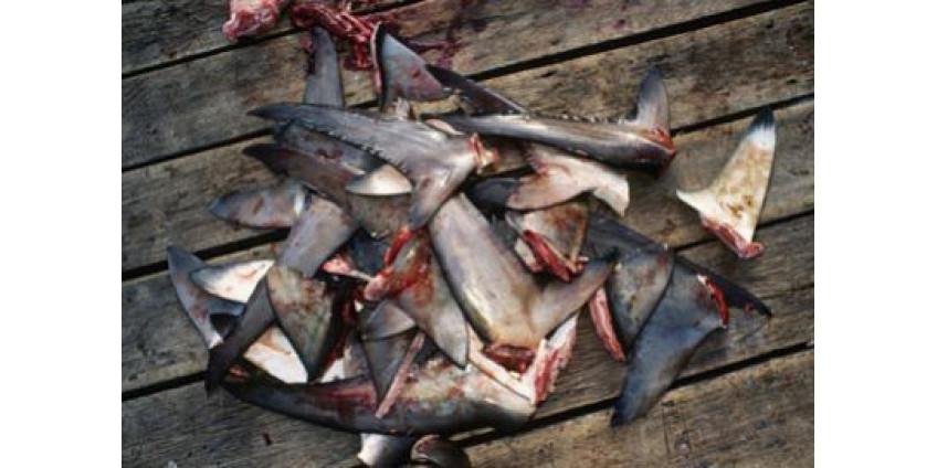 Акульи плавники теперь под запретом