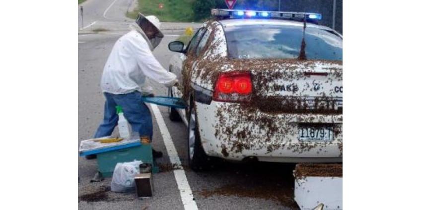 Пчелы атаковали автолюбителей