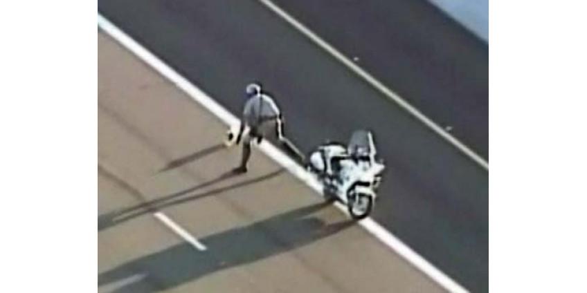 Полицейские гонялись за собакой по автостраде