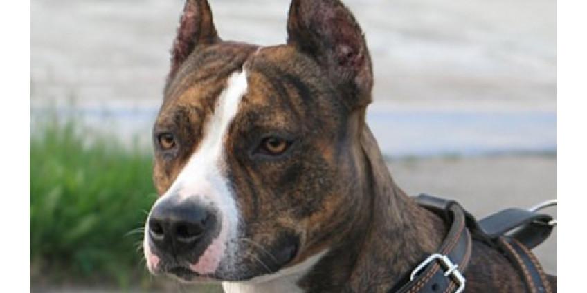 Собака нашлась через 8 лет