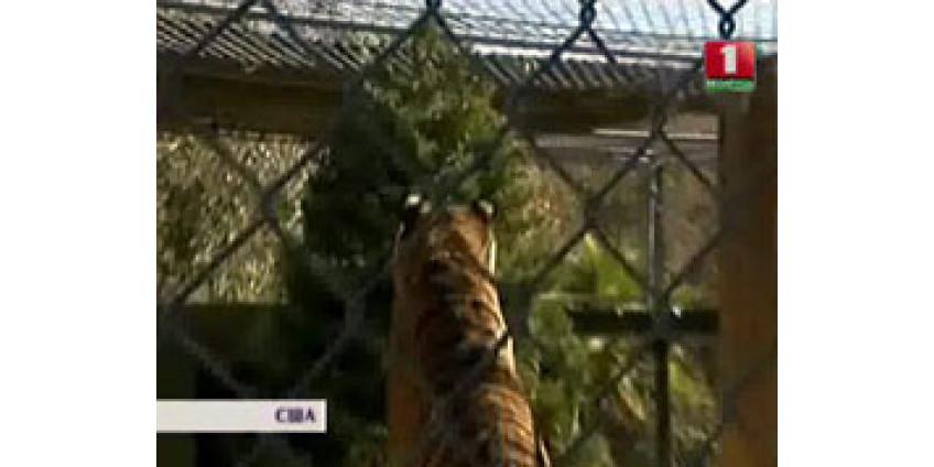 В Калифорнии придумали, как утилизировать елки