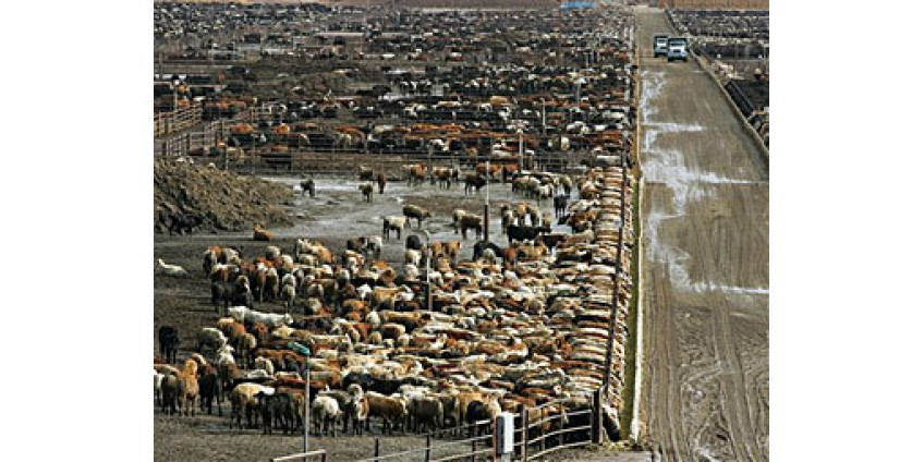 Мясокомбинат подожгли защитники животных