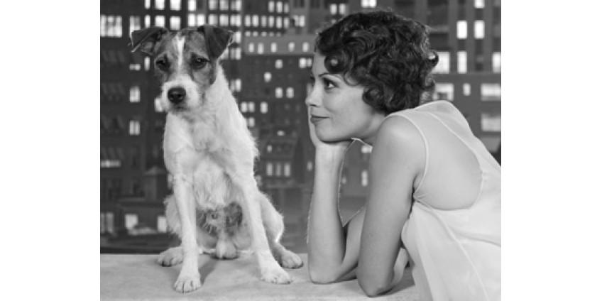 В Калифорнии учреждена кинопремия для собак