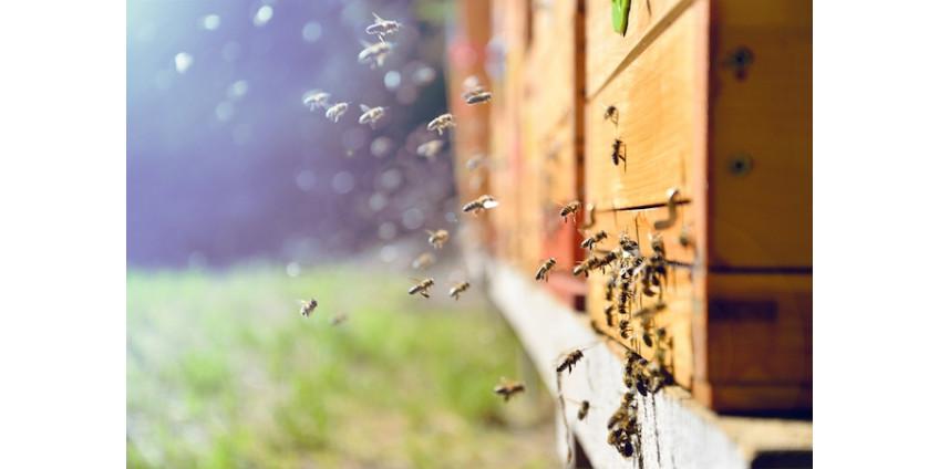 Житель Аризоны погиб от укусов пчёл