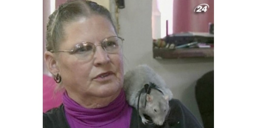 Крысы в Калифорнии спасают жизни людей