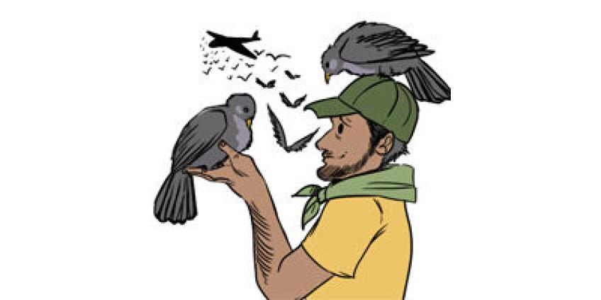 Любовь к голубям может привести к тюрьме