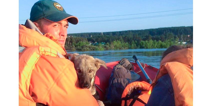 В Иркутской области подсчитывают потери от паводка