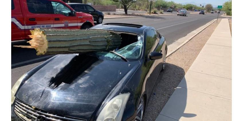 ДТП в Аризоне: водитель врезался в кактус
