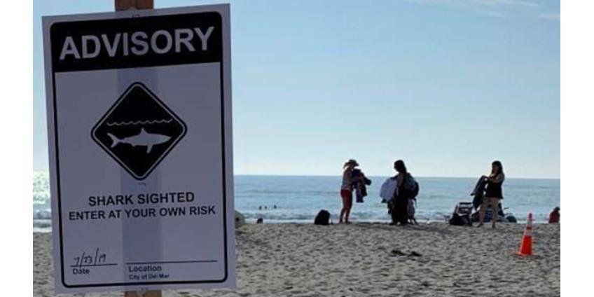 На пляже Del Mar были установлены предупреждающие об акулах знаки