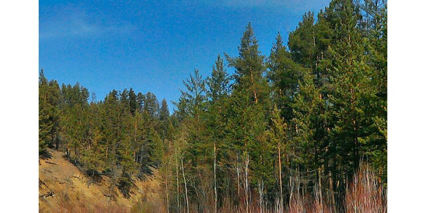 На Байкале разрешат вырубить лес ради БАМа и Транссиба