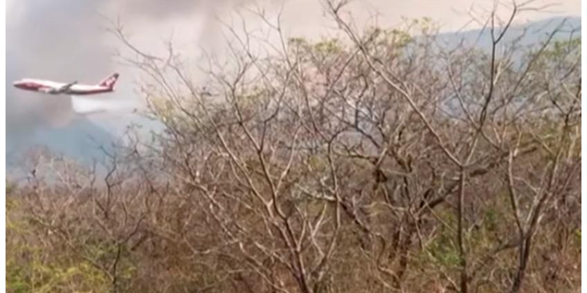 Пожары в Южной Америке: выгорело 1,2 млн гектаров саванн в Боливии