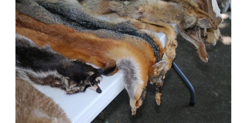 В Калифорнии запретили натуральный мех