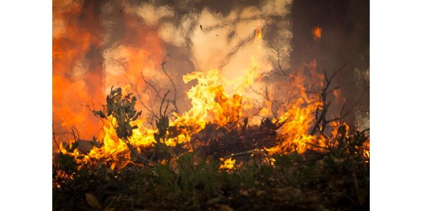 Режим ЧС в Калифорнии: 50 тысяч человек эвакуированы