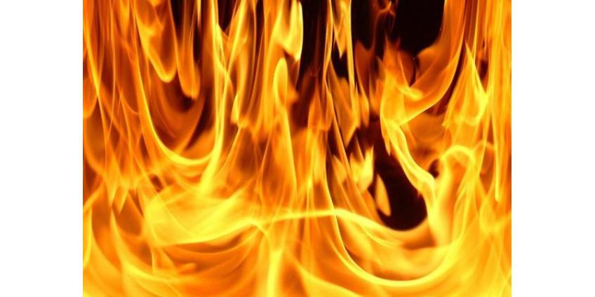 Во время калифорнийских пожаров конь вернулся на пылающее ранчо для спасения своей семьи