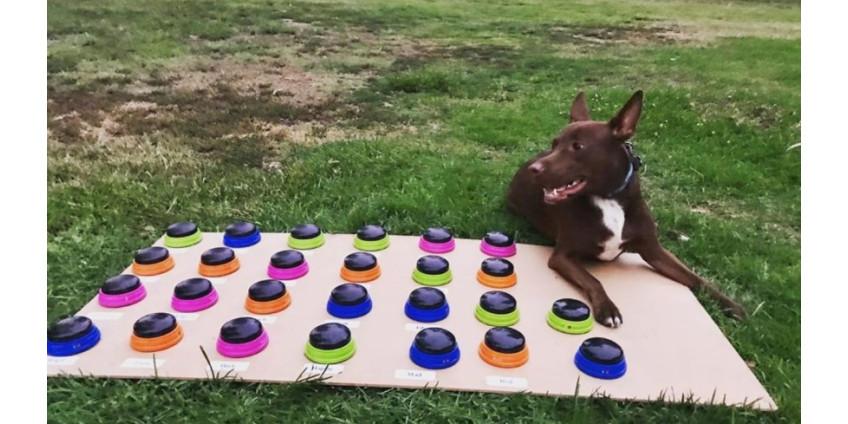 Логопед из Сан-Диего набирает популярность благодаря ученой собаке