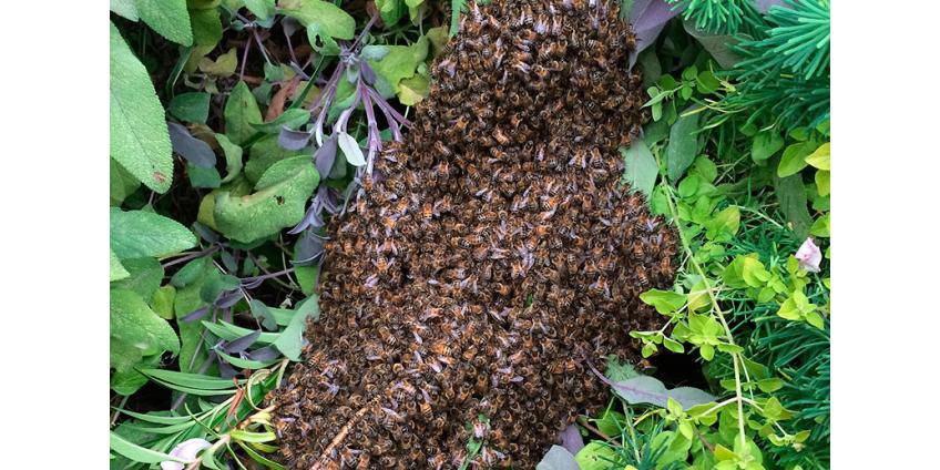 В Танзании пчелы едва не выгнали со стадиона футболистов и зрителей