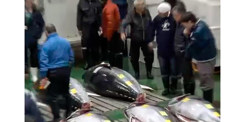 На традиционном рыбном аукционе в Японии продали голубого тунца за 1,8 млн долларов