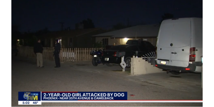 Полиция Финикса: 2-летнего ребенка покалечила собака