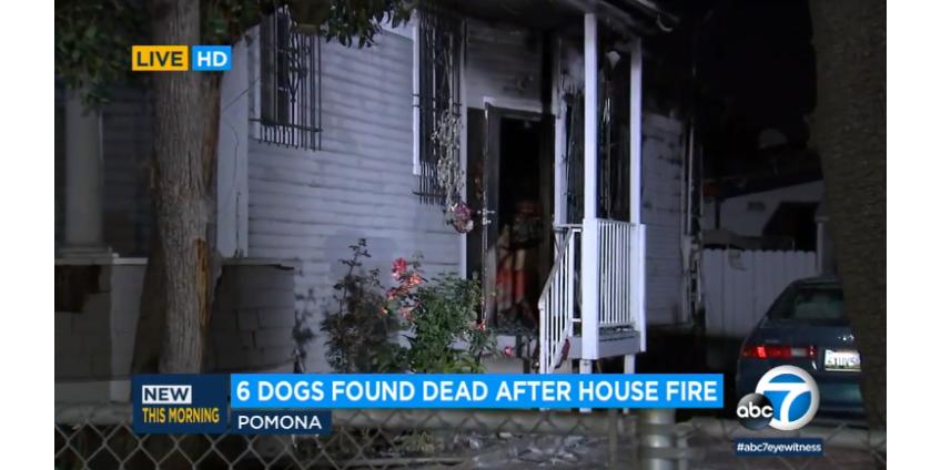 Округ Лос-Анджелес: при пожаре в доме погибли шесть собак