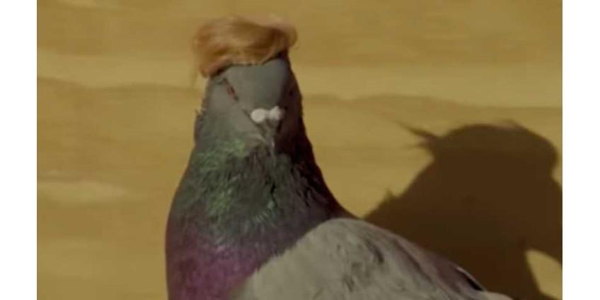 В Лас-Вегасе начали летать голуби с кепочкой и прической Дональда Трампа