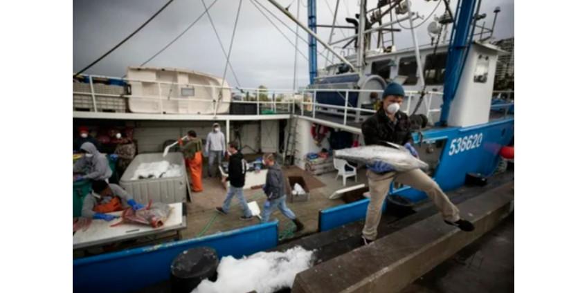 У берегов Сан-Диего рыбакам некуда девать улов из-за коронавируса