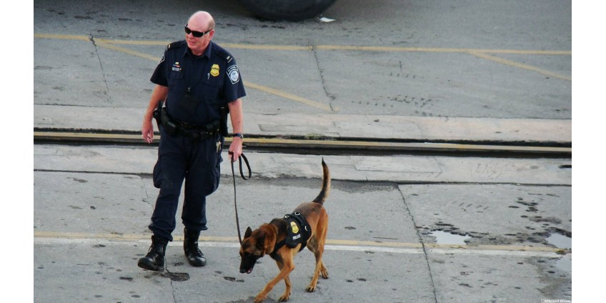 Полиция Лос-Анджелеса перестала обращать внимание на мелких нарушителей