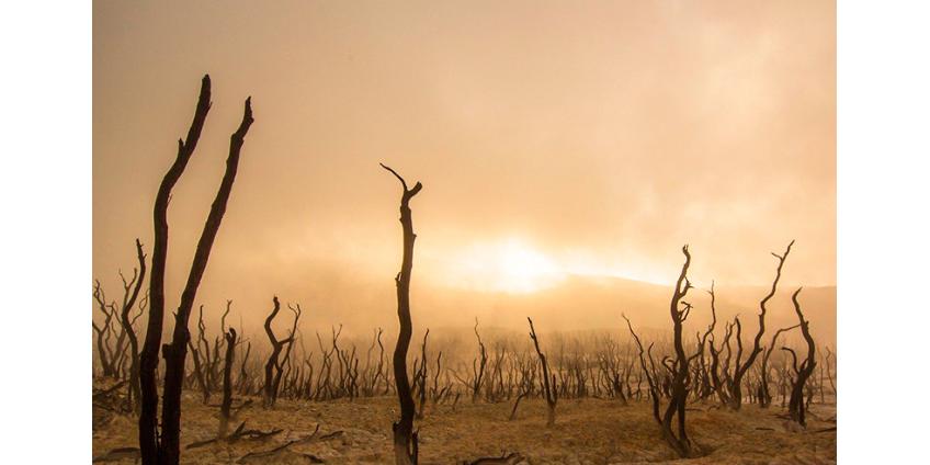 """""""Десять казней египетских"""": вслед за пандемией могут прийти пожары, потоп, неурожай и нашествие саранчи"""