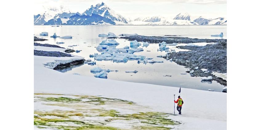 Из-за глобального потепления снег в Антарктике становится ярко-зеленым