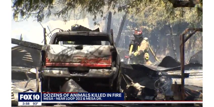 Пожар уничтожил десятки животных в пригороде Финикса