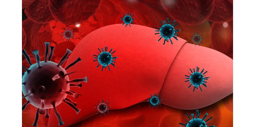 Нобелевскую премию по медицине-2020 получили ученые, открывшие вирус гепатита С