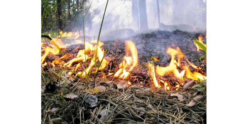 В Сан-Диего остается высокой опасность возникновения пожаров