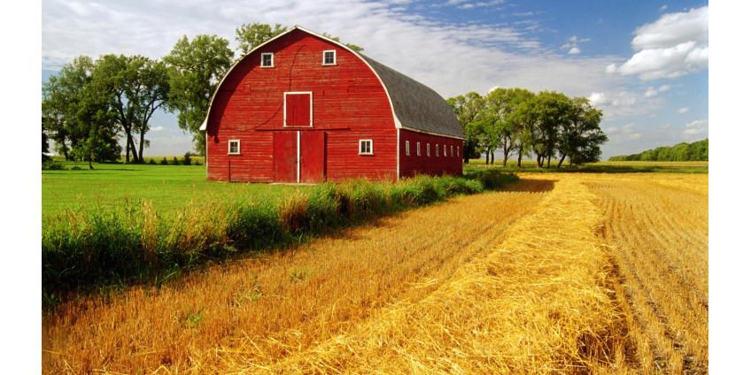 Фермеры Финикса страдают от рекордной жары