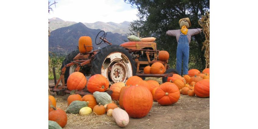 Жителям Сан-Диего напомнили о безопасном праздновании Хэллоуина