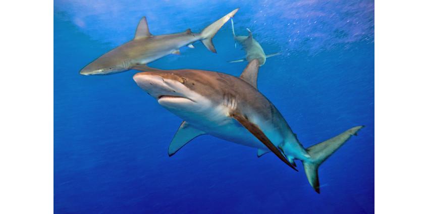 Полуфинал лиги серфинга прервали после смерти одного из участников от зубов акулы