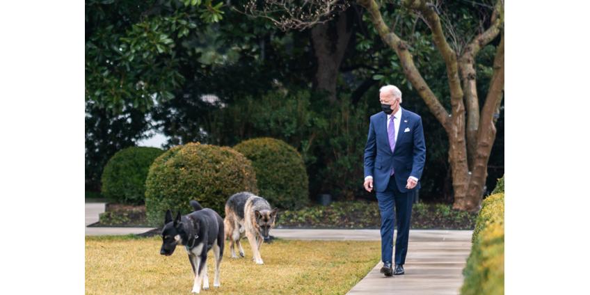 Собак Джо Байдена выдворили из Белого дома из-за агрессивного поведения