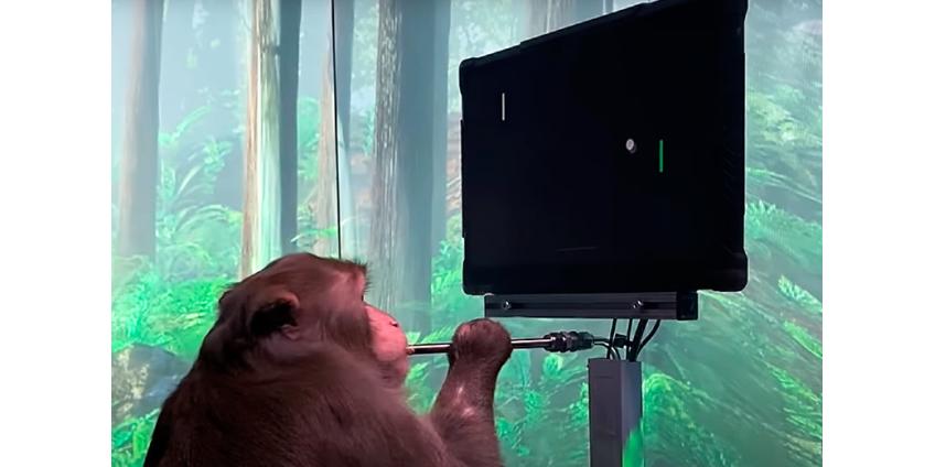 Компания Neuralink показала ВИДЕО с обезьяной, играющей в Pong силой мысли