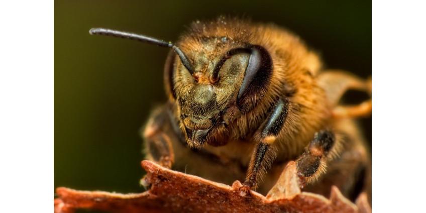 На пожарного из Финикса и туриста напал рой пчел на горе Camelback