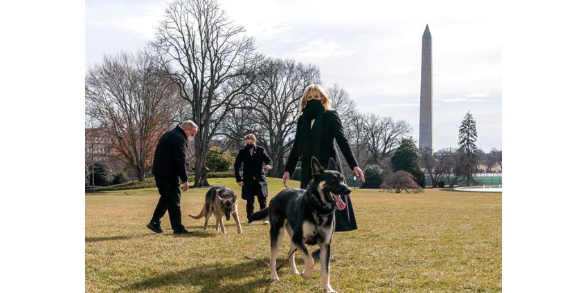 Джо Байден и его жена Джилл планируют завести кошку в Белом доме