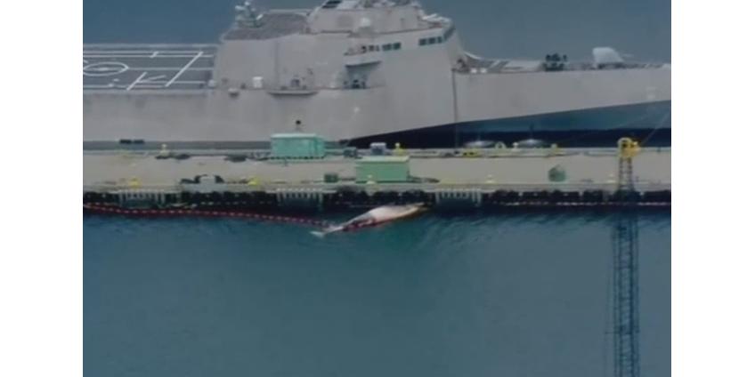 Из-за маневров эсминца в порту Сан-Диего погибли два кита редкого вида