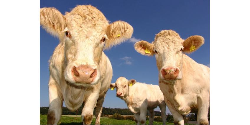 Из-за ферм ежегодно умирает 18 тысяч американцев