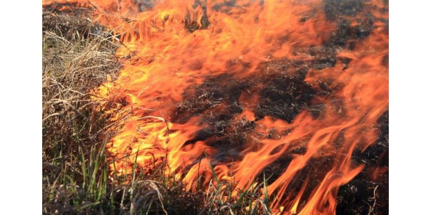 Пожарные Сан-Диего потушили пожар в Carmel Valley