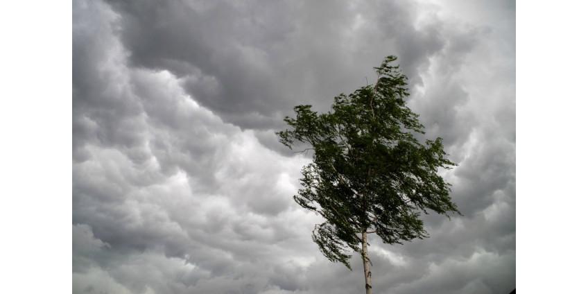 На выходных на Финикс обрушились муссонный дождь, ветер и пыль