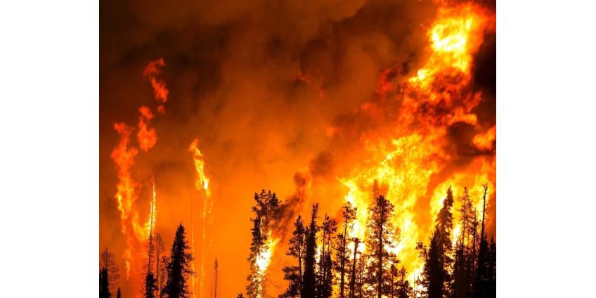 В Angeles National Forest уровень пожарной опасности подняли до «экстремального»