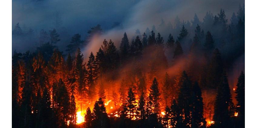Тысячи людей эвакуировали из-за сильнейших лесных пожаров в США