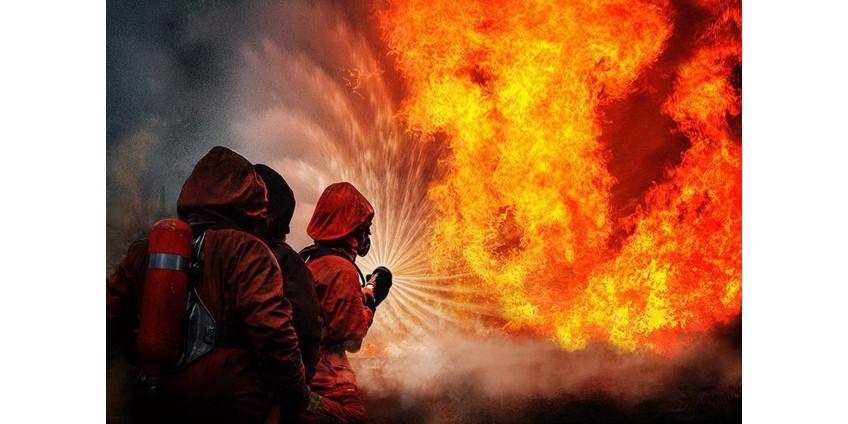 В Алжире из-за массовых лесных пожаров погибли 65 человек