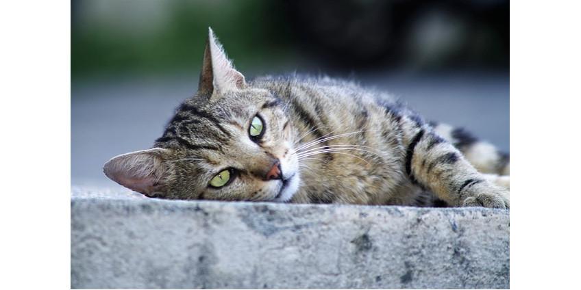 Волонтеры занялись отловом диких кошек в Финиксе